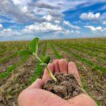 Levantamento aponta que agricultura baiana gerou R$ 27,5 bilhões em 2020